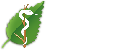 Naturheilpraxis Ute Lehmann